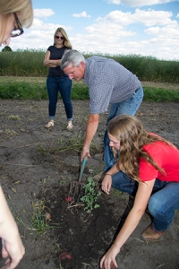 Scott digging potatoes